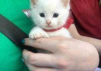 主人撿回一隻小奶貓,家裡金毛立馬不高興了,結果沒幾天畫風...