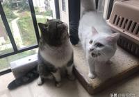 貓媽媽生了三隻小奶貓,有一隻越長越離譜,這貨確定是親生的嗎?
