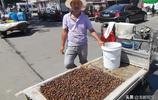 河南這種蟲子剛上市80一斤,價格堪比龍蝦卻有人搶著吃