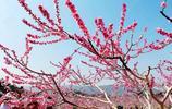 領略利州最浪漫桃花園,景美去的人少,還是必去的踏青地!