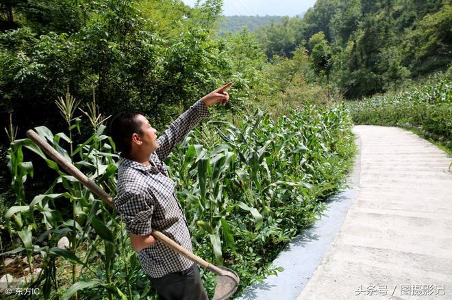大山裡的漢子,靠一隻手種黃連魔芋板栗等,讓一家人過上幸福日子