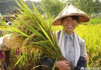 什麼是三農?現在國家對三農的政策怎麼樣?
