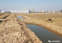 「蝦稻課堂」第二集:稻田改造和水草種植規範(圖文)