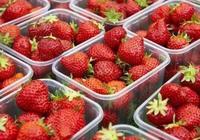 清洗草莓別再傻傻用水衝了,教你正確的清洗方式,吃得健康更放心