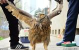 農民撿回一隻4斤重的鳥,專家慶幸沒亂放生,村民說專家這次靠譜