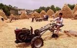二十年前割麥的童年,再也回不去的童年,(看哭了)