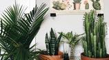 Kun Plant|一圖一解析 教你居家空間怎麼擺放和搭配植物(一)