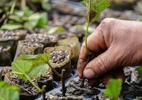 最實用的無土栽培扦插育苗方法,學會少求人