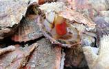 週末市場海鮮淘下酒菜 扇貝13元2斤 海蠣子6元一斤 個個鮮肥美味