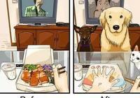 養狗之後大家的生活都發生了哪些改變呢?