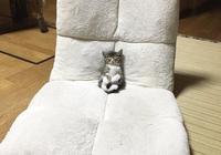 進客廳發現小喵躺在沙發看電視睡著了,一看真的好可愛!