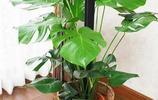 幾乎沒人知道,家裡擺上這幾款植物,家人的身體越來越健康了