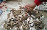 農村大集上有人賣的蟹子非常便宜三塊錢一斤,能吃嗎?