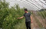 大學生夫妻不顧家人反對,辭城市工作回村種野菜,如今年銷三百萬
