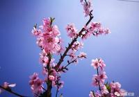 翼城縣裡砦北續:邀您聽音樂 賞桃花 結良緣