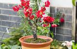 等發工資了一定要擺幾盤花卉,再單調的冬天,也要讓家裡溫暖如春