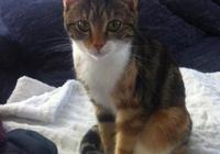 流浪貓潛入女子家偷食物,卻意外被女子收養,生1只小貓以表感謝
