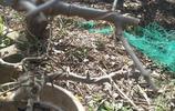 我的下山樁 2019年3月5日 拍攝 盆景花盆 都被太陽 晒枯了