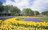 世界最大的球莖花園——荷蘭的庫肯霍夫公園
