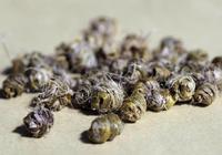 鐵皮石斛和金釵石斛有何區別?