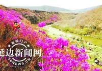 敦化首屆金達萊採風節本月末舉行