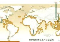 鮑魚大百科——教你認識世界各地的鮑魚