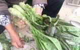 八十歲徐大媽集市賣萵苣 她教你如何分辨什麼是香萵苣和水萵苣