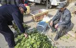 山東農村50歲農民馬大哥種大棚20畝,靠勤勞雙手支撐一個家,點贊