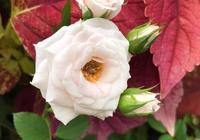 不同顏色的花含義有什麼不同?瞭解這些熱門花語,減少送錯花尷尬