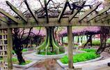 春日玄武湖