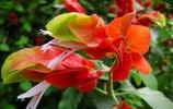 花落知多少 這些花兒,你知多少?