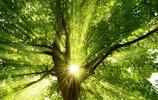 熱帶雨林的陽光
