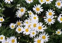 你最喜歡的花是什麼花?