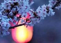 《立春·除夕》