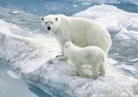 """真正的企鵝已經在北極滅絕,科學家:南極企鵝是""""假""""企鵝"""