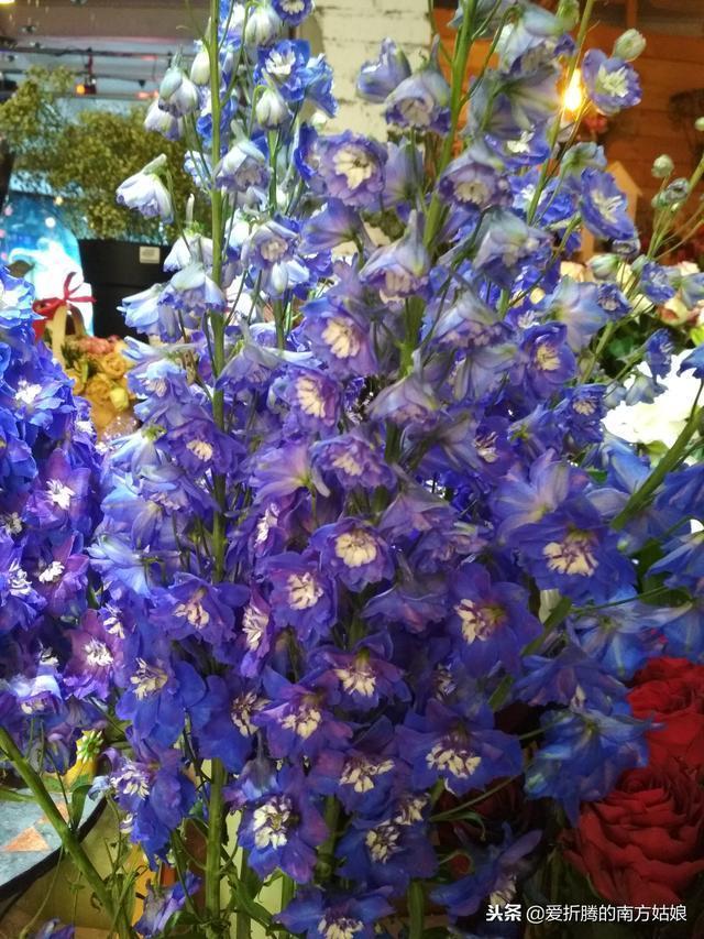 週末了,熱愛生活的我得去花市逛逛