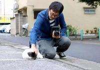日本大叔鏡頭下的流浪貓,太治癒了,淨化心靈!這就是歲月靜好吧!