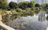 溫州的楊府山公園你一定要逛逛,爬爬山看看風景,太美了!