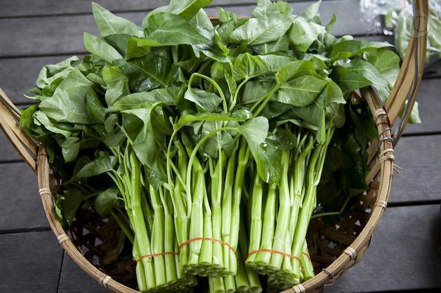 俗稱空心菜,真實名字卻很拗口,但種植方法卻不是很難