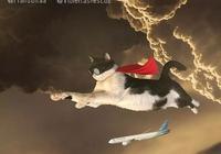 注意!喵星人襲擊地球了!