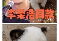 李榮浩同款狗狗只賣一塊錢!快來看看還有哪些明星擁有同款