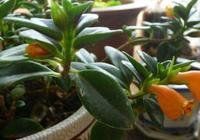 吊蘭品種多,這3種格外受歡迎!家養1年有驚喜,重點開花好看!