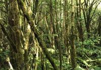 徒步墨脫熱帶雨林
