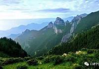 賀蘭山岩羊:懸崖峭壁上舞動的精靈