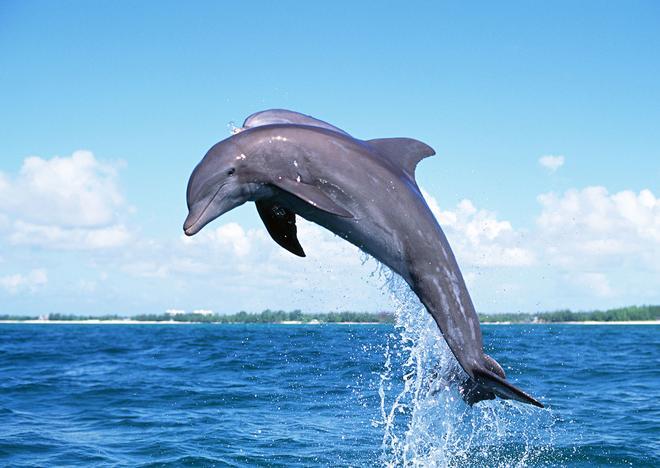 動物圖集:海豚