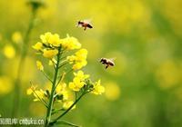 江邊鳥對聯19:採蜜工蜂苦