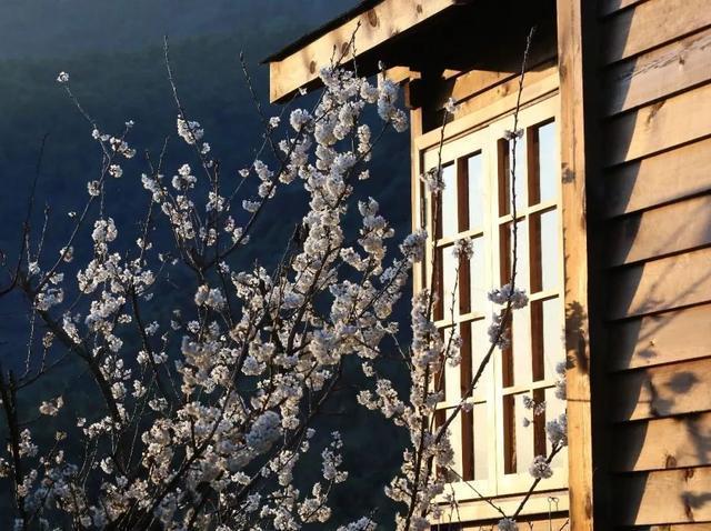 在春天,重拾最初的幸福