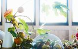 從自然中汲取靈感,國外花藝大師作品欣賞