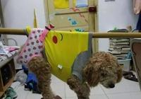 """校長""""突擊""""檢查寢室,發現很多奇葩寵物,稱同學們個個是人才"""