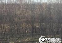 燒玉米稈引火災 附近落葉松被燒成乾柴